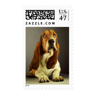 Love Basset Hound Puppy Dog Postage Stamp
