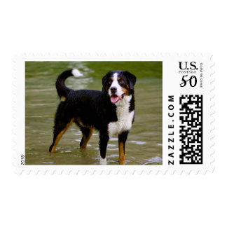 Love Bernese Mountain Dog Puppy Postage Stamps