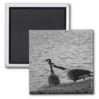 Love Birds B&W Fridge Magnet