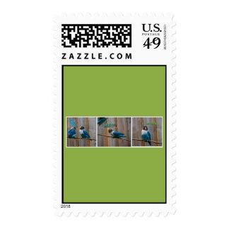 Love Birds Cartoon Strip Postage Stamp