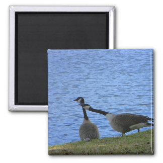 Love Birds Color Fridge Magnet