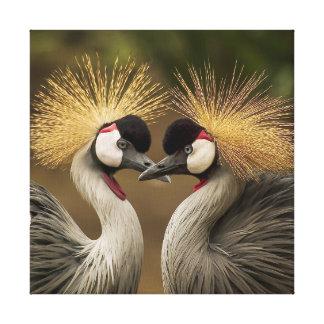 Love Birds, Grey Crowned Cranes Canvas Print