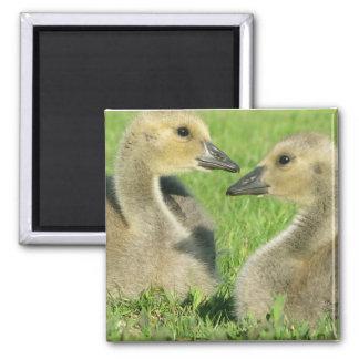 Love Birds- Original Photo Refrigerator Magnets
