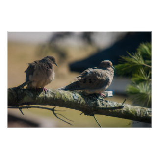 Love birds painting poster