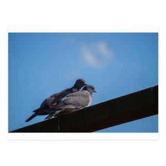 Love birds postcard