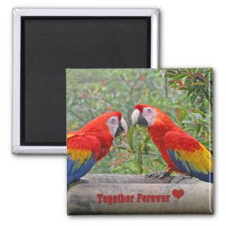 Love Birds Scarlet Mackaws Happy Couple 2 Inch Square Magnet