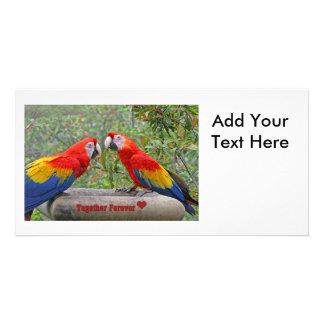 Love Birds Scarlet Mackaws Happy Couple Card