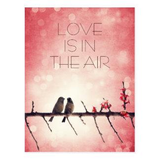 Love birds story postcard