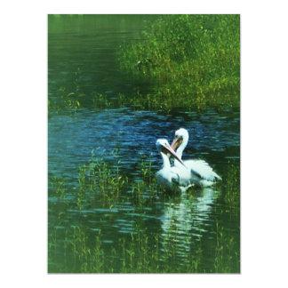 Love Birds white pelican couple MWUH! Card