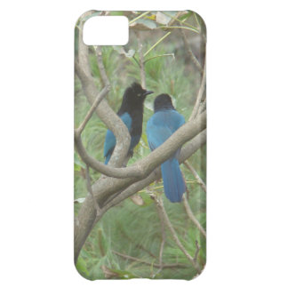 Love BIrdy Style, Tropical Black-Blue Jay Case For iPhone 5C