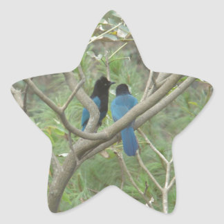 Love BIrdy Style, Tropical Black-Blue Jay Star Sticker