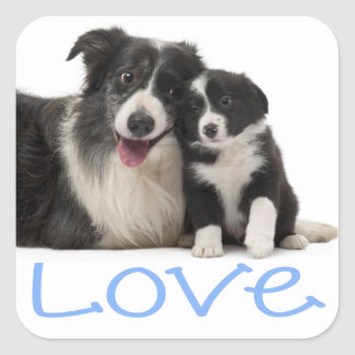 Love Black And White Border Collie Puppy Dog Blue Square Sticker