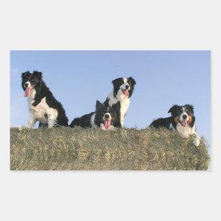 Love Black And White Border Collie Puppy Dog Rectangular Sticker