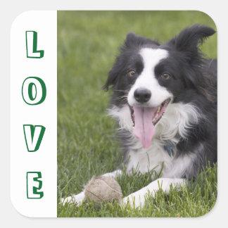 Love Black And White Border Collie Puppy Dog Square Sticker