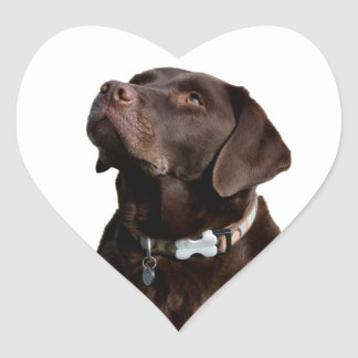 Love Black Brown Labrador Retriever Sticker  Label