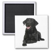 Love Black Labrador Retriver Puppy Dog  Magnet