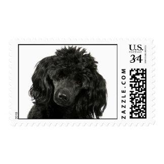 Love Black Poodle Puppy Dog Postage Stamps