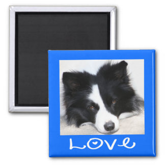 Love Black & White Border Collie Puppy blue Magnet