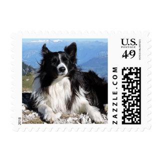 Love Border Collie Puppy Dog Postage Stamps
