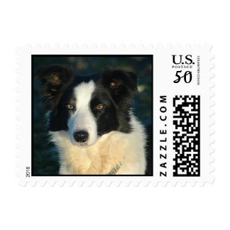 Love Border Collie Puppy Dog Postage Stamps