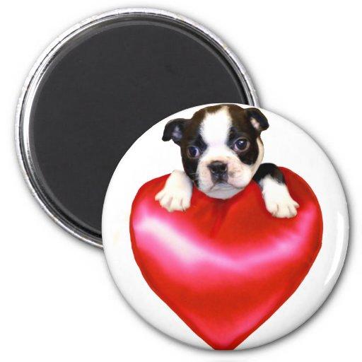 Love Boston Terrier magnet