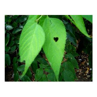 Love bug's Leaf Postcard