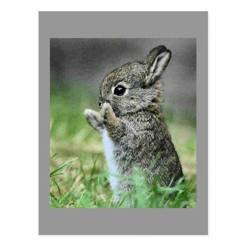 Love Bunny Hug Postcard