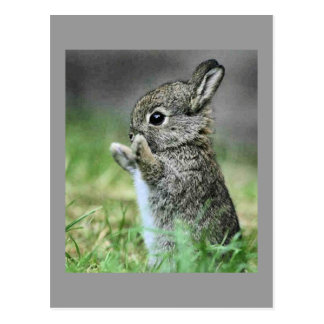 Love Bunny Poscard Postcard