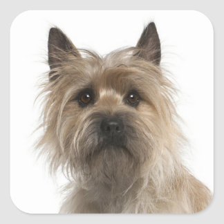 Love Cairn Terrier Puppy Dog Greeting Stickers