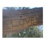 Love Carving Postcard