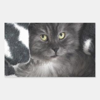 love cats rectangular sticker