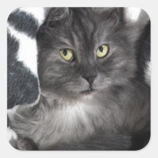 love cats square sticker