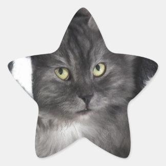 love cats star sticker