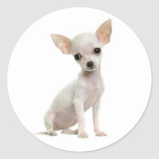 Love Chihuahua Puppy Dog Greeting Stickers