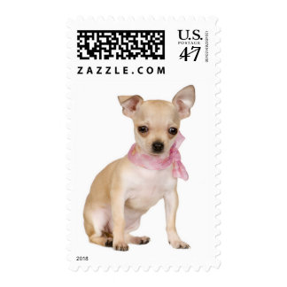 Love Chihuahua Puppy Dog Pink Scarf Postage