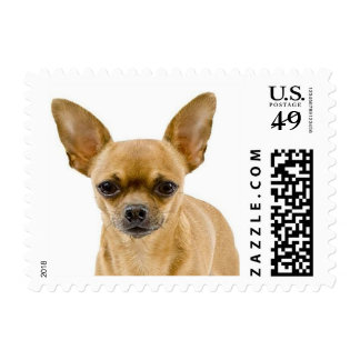 Love Chihuahua Puppy Dog Postage