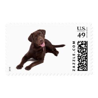 Love Chocolate Brown Labrador Retriever Puppy Dog Stamp