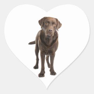 Love Chocolate Brown Labrador Retriever  Sticker