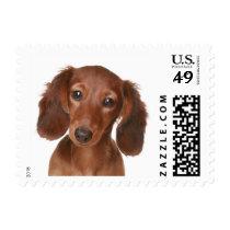 Love Dachshund Chocolate Brown Puppy Dog Postage