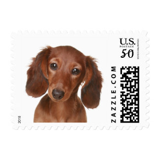 Love Dachshund Chocolate Brown Puppy Dog Postage