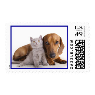 Love Dachshund Puppy Dog And Kitten Postage Stamps