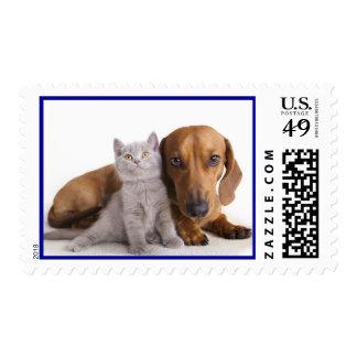 Love Dachshund Puppy Dog And Kitten Postage Stamps