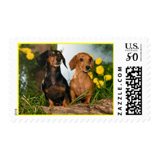 Love Dachshund Puppy Dog Postage Stamp