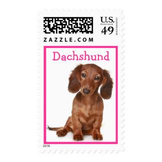 Love Dachshund Puppy Dog Postage Stamp