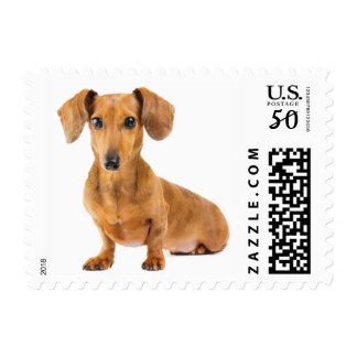 Love Dachshund Puppy Dog Postage Stamps