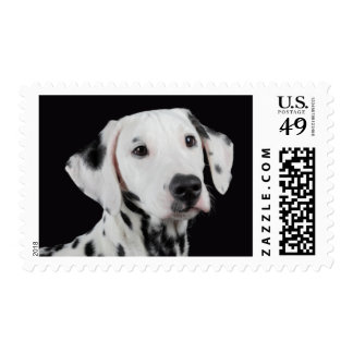 Love Dalmatian Puppy Dog US Postage Stamps