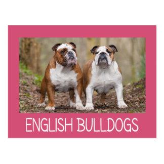 Love English Bulldog Puppy Dog Pink Post Card