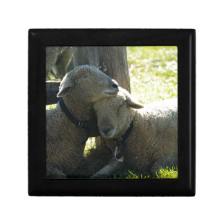 Love Ewe Sheep Trinket Boxes