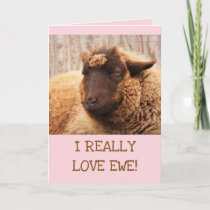 LOVE EWE Sheep Valentine's Day Holiday Card