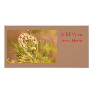 Love Ferns Photo Card